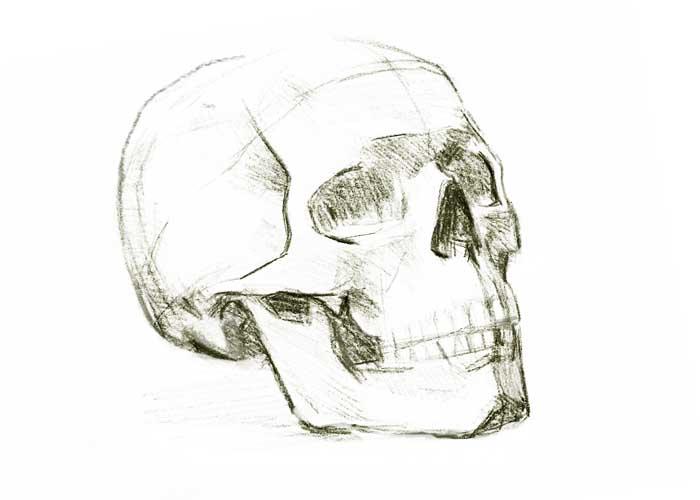 skull sketch 2